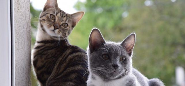 Cibo preferito dei gatti