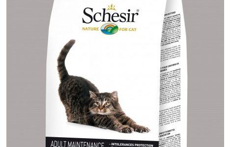 recensione crocchette gatti Crocchette Schesir