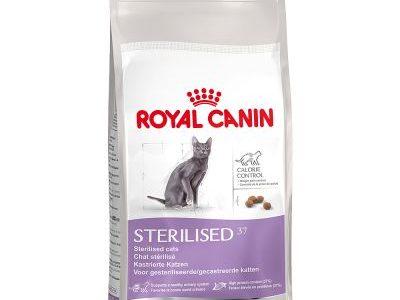 recensione delle Crocchette per gatto Royal Canin