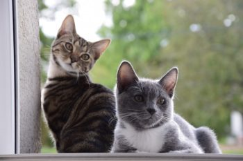 recensioni delle migliori marche di cibo per gatti
